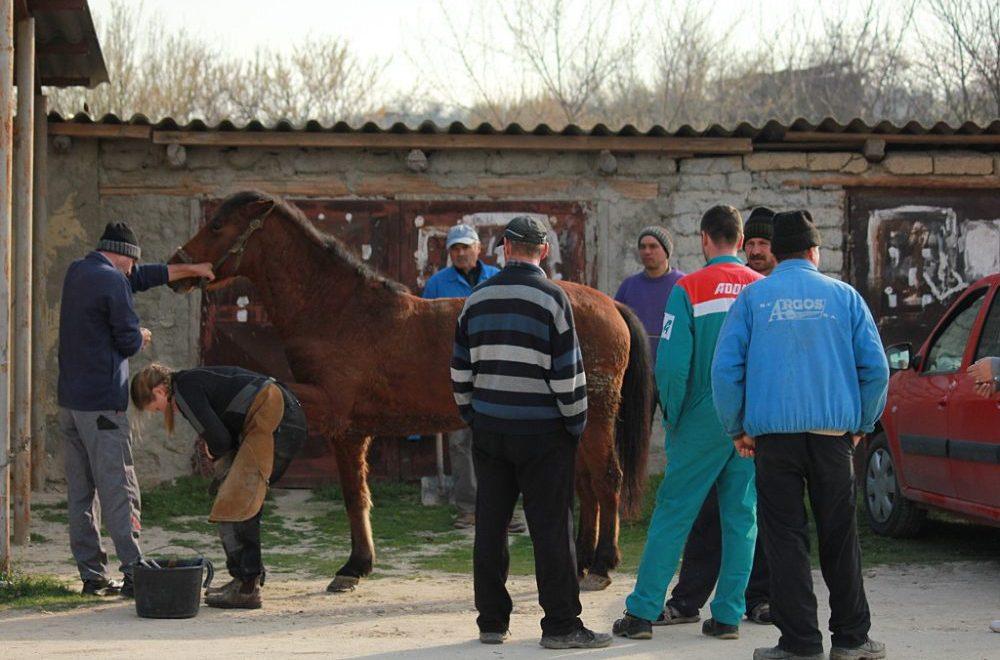 """""""La settimana degli equini"""": un'iniziativa di successo"""