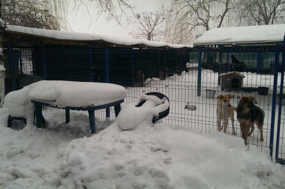 Emergenza neve e gelo