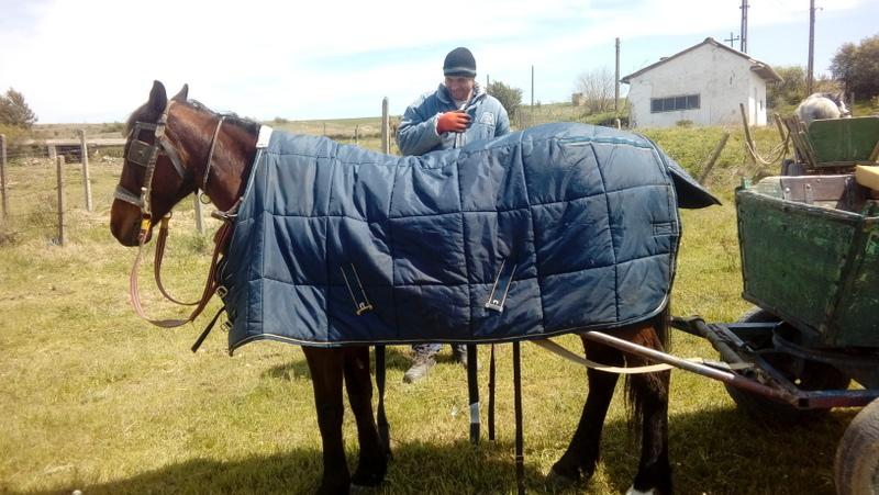 La consegna della coperte e delle cavezze