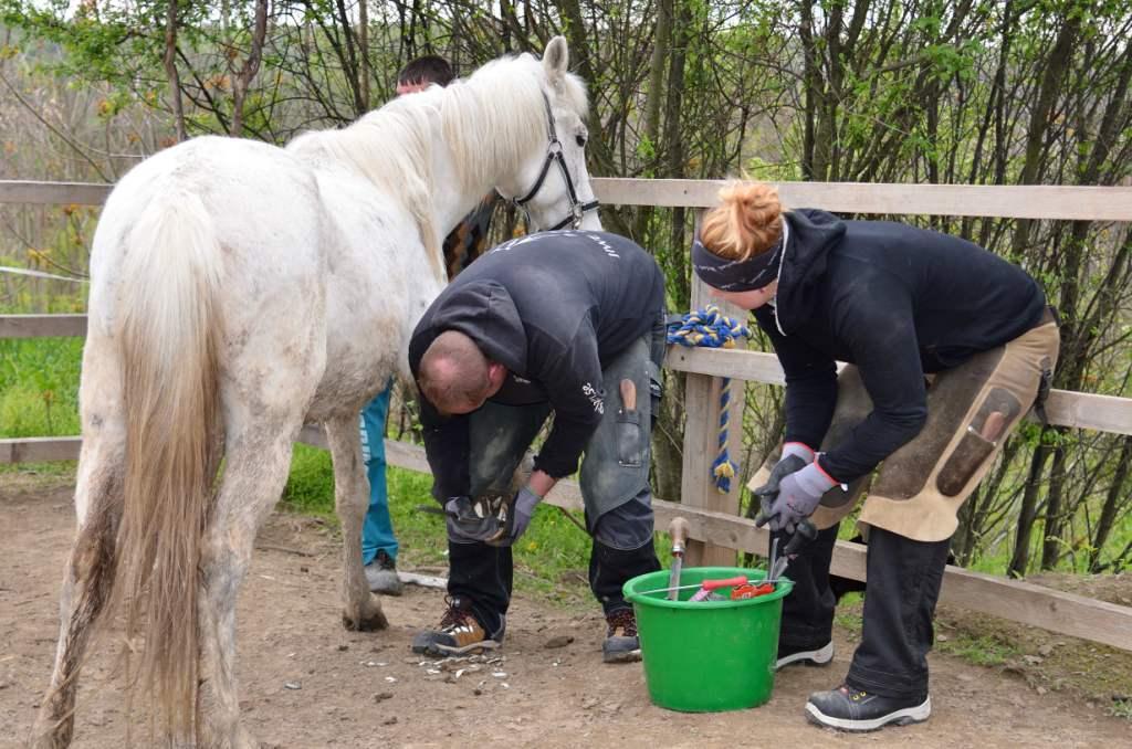 Riprende il programma di assistenza gratuita per cavalli e asini