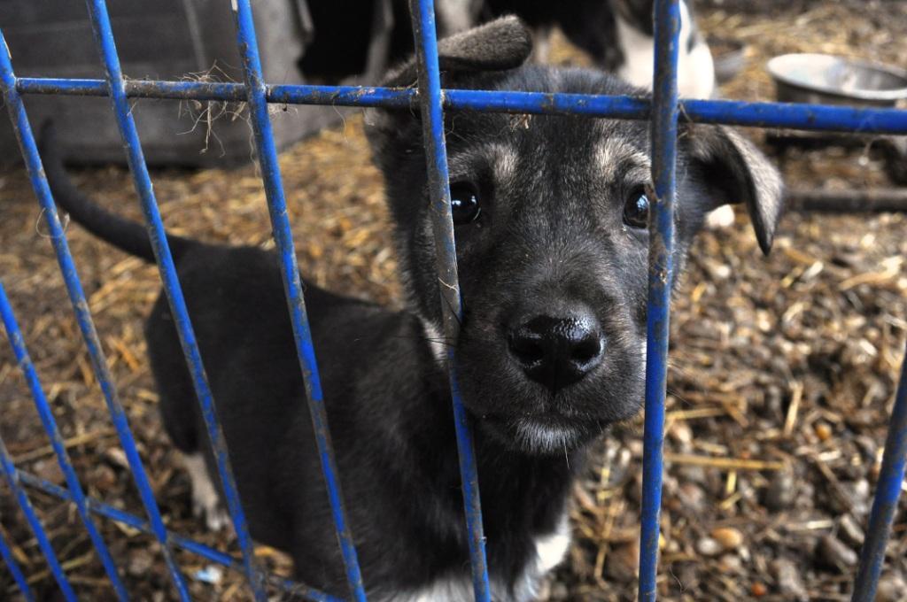Emergenza cuccioli, un'estate da dimenticare