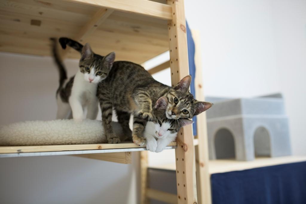 Ospiti clinica gatti