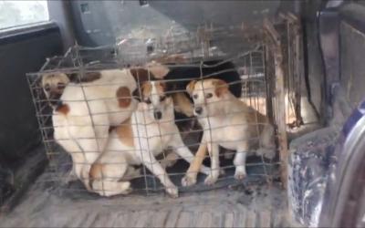 Rastrellamenti a Cernavoda: l'ennesima sfida per Save the Dogs