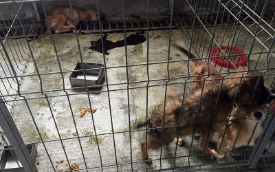 Sign the petition to shut down the kennel of horrors in Ovidiu