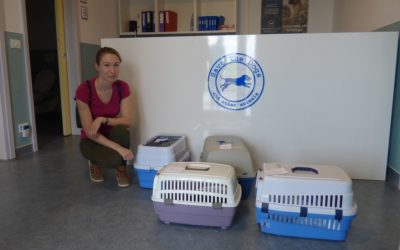 Sterilization of owned dogs and cats: 104 operations in 5 days