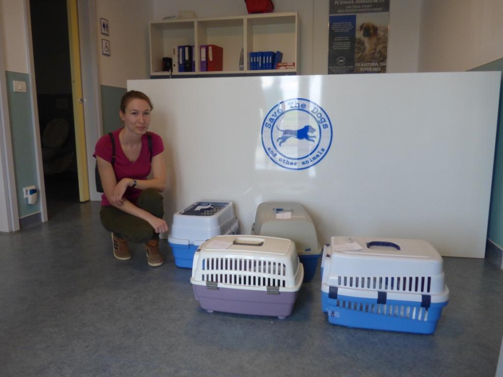 Sterilizari gratuite a cainilor si pisicilor: calendarul urmatoarelor editii