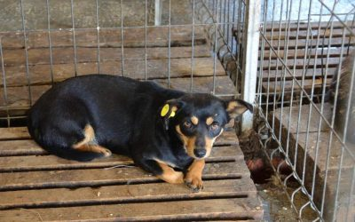 New update about the kennel of horrors in Ovidiu
