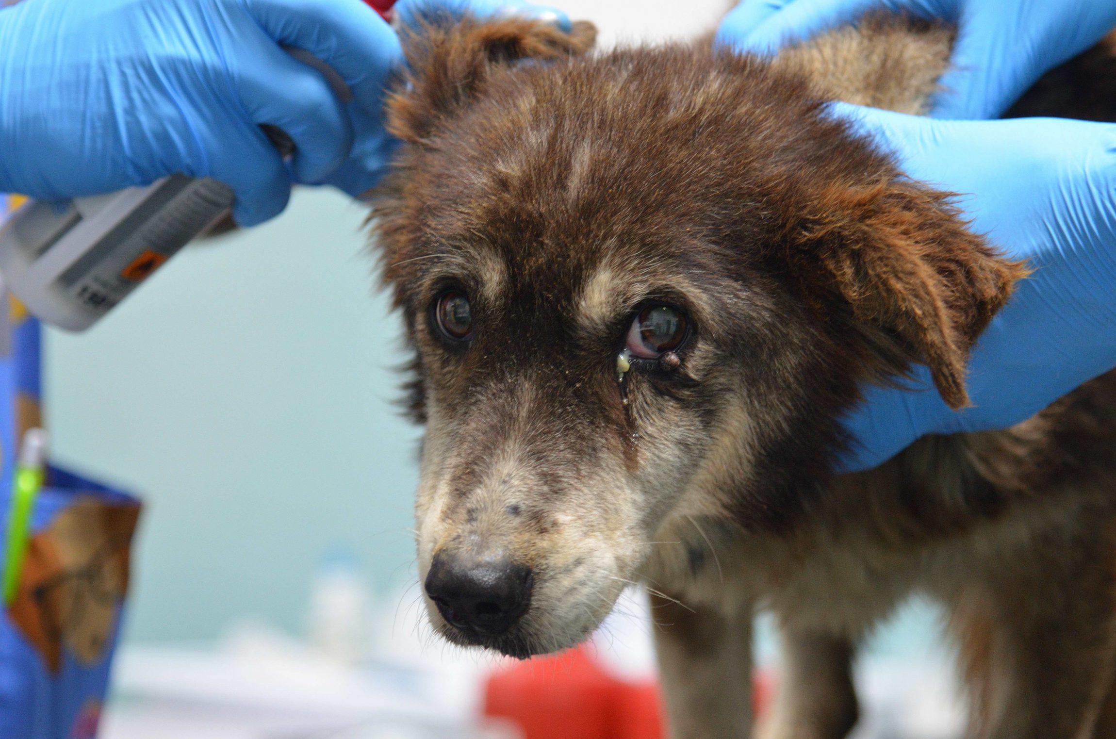 Ioana, appena arrivata in clinica,viene visitata dai nostri veterinari
