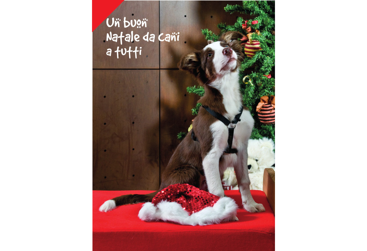 cane-Natale_fronte_orizzontale
