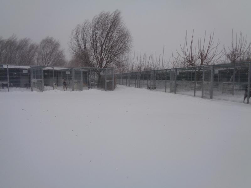 Frost Emergency