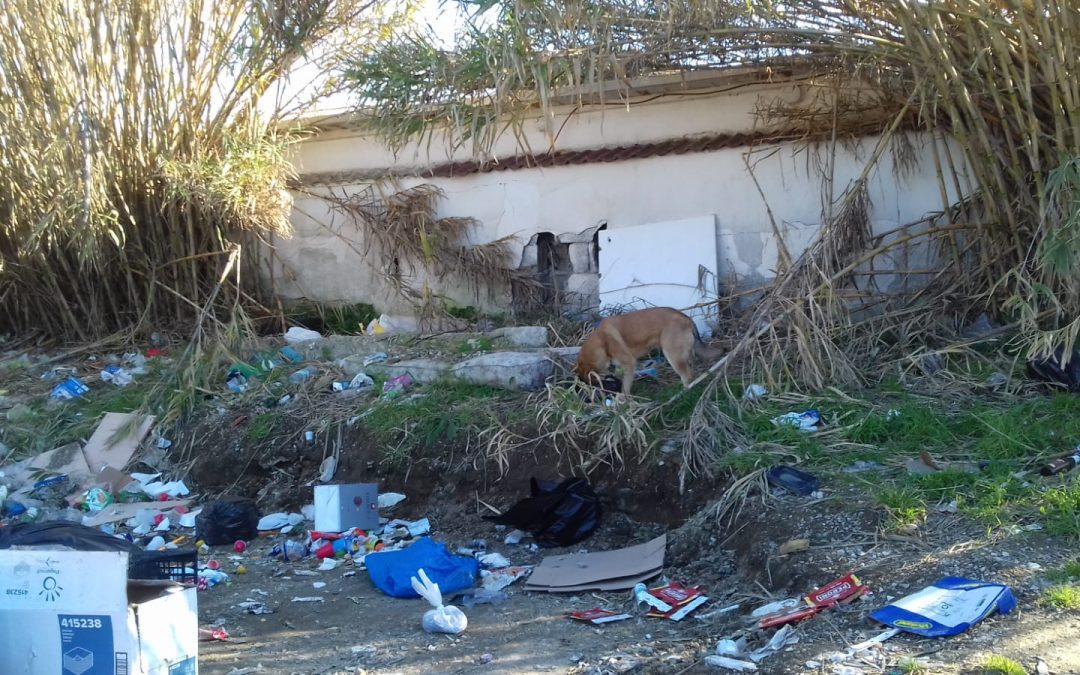 The first project for dogs in Southern Italy has started