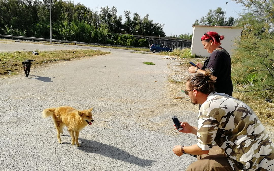 Census of strays in the Eastern Neapolitan area