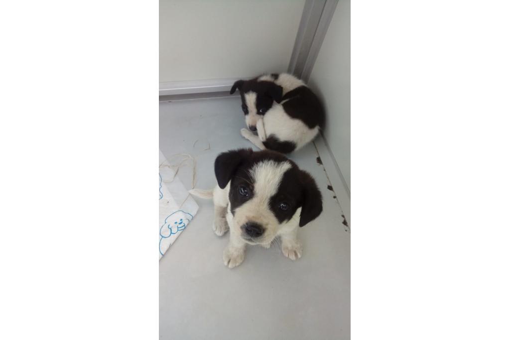Lola e Hela nella nostra clinica