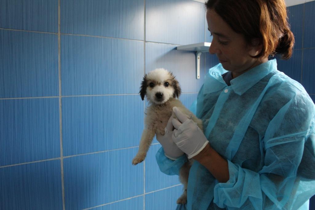 Ago e Spillo sono in attesa di uscire dal nostro reparto di quarantena ma stanno bene e saranno presto proposti per l'adozione.