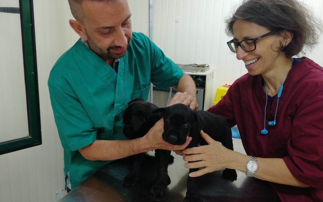 Reached 200 sterilizations in Italy