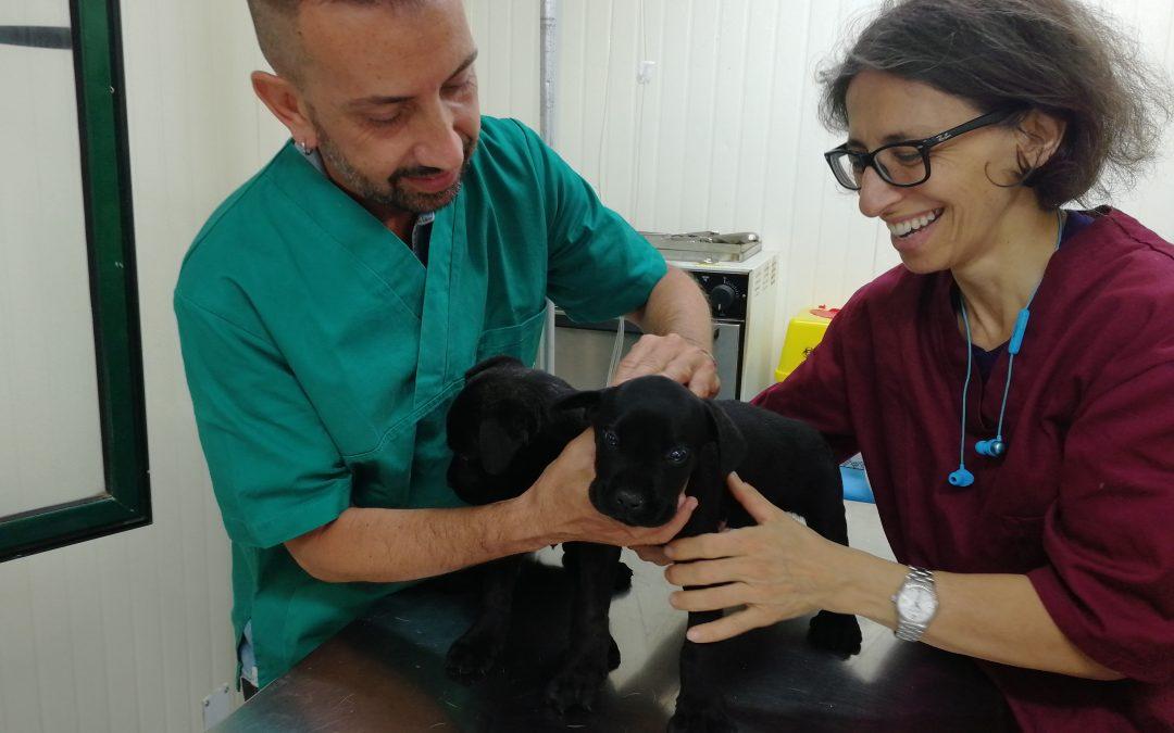 Superate le 200 sterilizzazioni in Italia