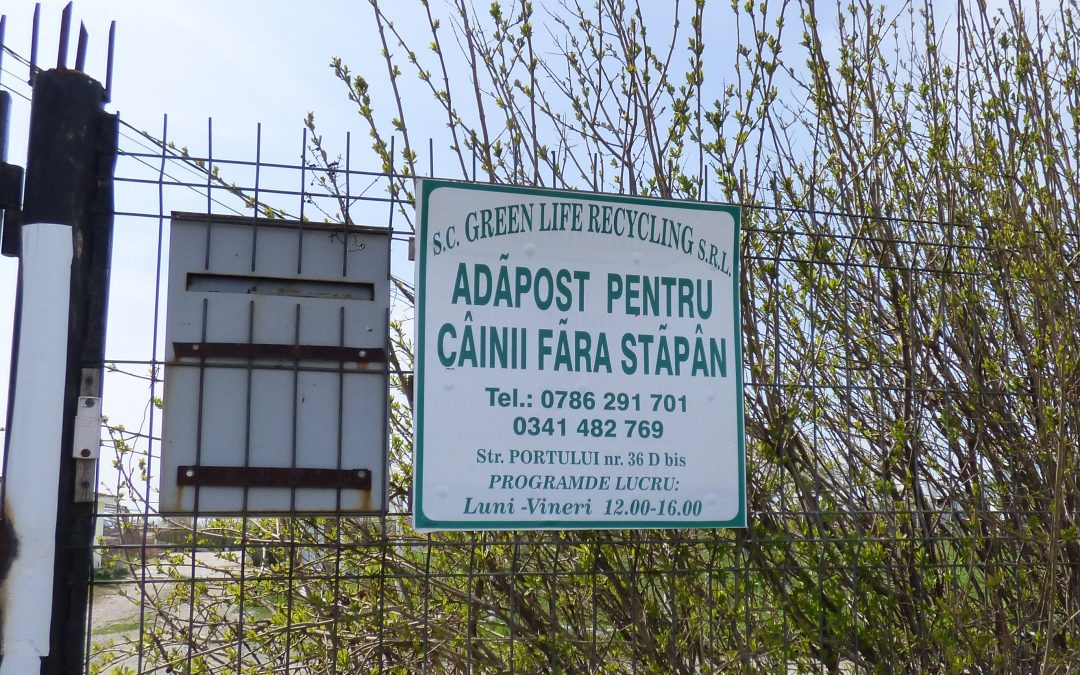 The kennel of horrors of Ovidiu has apparently stopped its catch