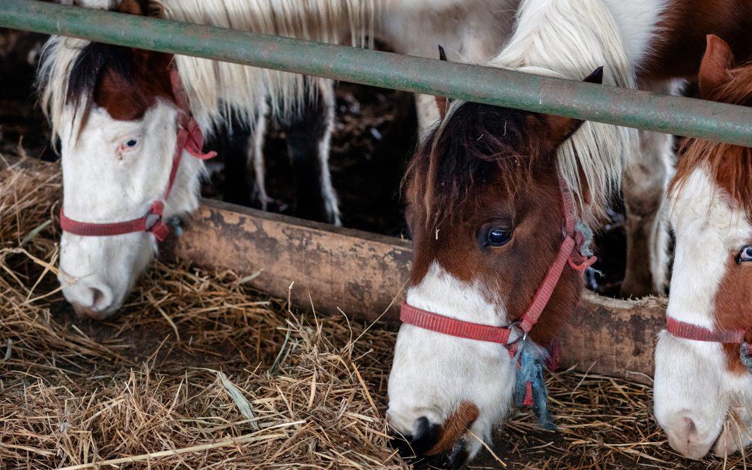 Caii din Constanța au fost salvați!
