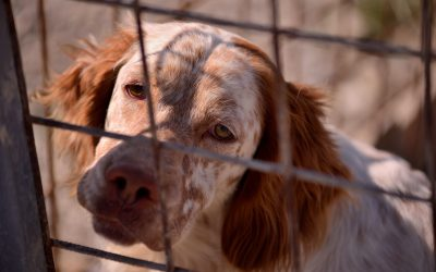 The story of Save the Dogs' first inspection of Calabria