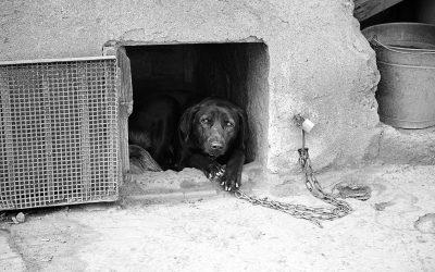 Verso il divieto di tenere i cani legati alla catena