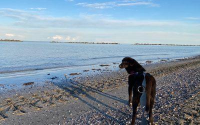 Un lascito di speranza per cani come Celeste