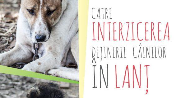 """Raport """"Catre interzicerea deținerii câinilor în lanț"""""""
