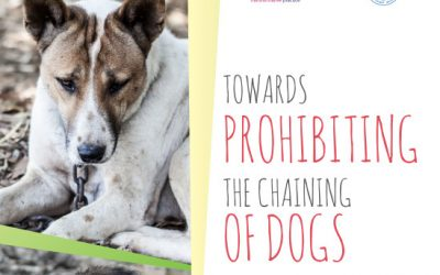 """International report """"Towards prohibiting the chaining of dogs"""""""