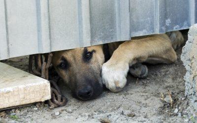 Abbiamo vinto! Introdotte multe severe a chi incatena un cane in Campania