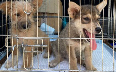 Lulia and Sofie saved, thanks to your help