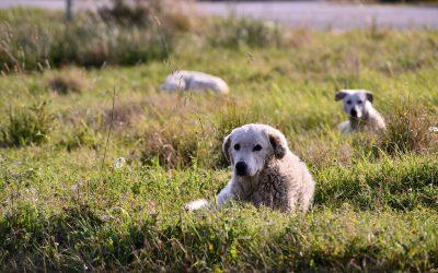 Regionali in Calabria, Save the Dogs lancia il manifesto contro il randagismo